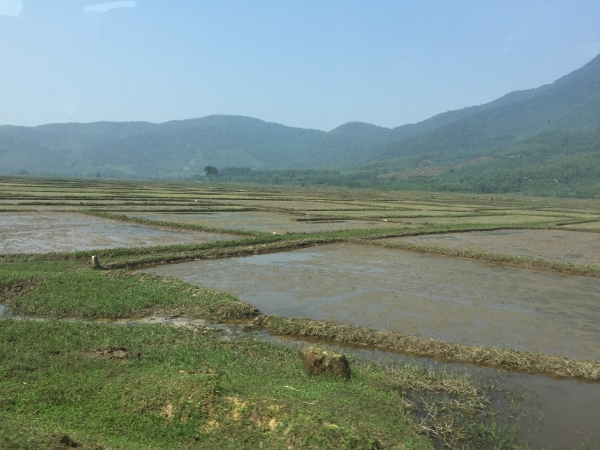 Flooded Rice Paddy along Highway 1