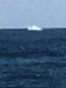 Whale spotted from Sheraton Kauai Balcony