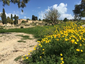 A (Half) Day Trip to Carthage from Tunis