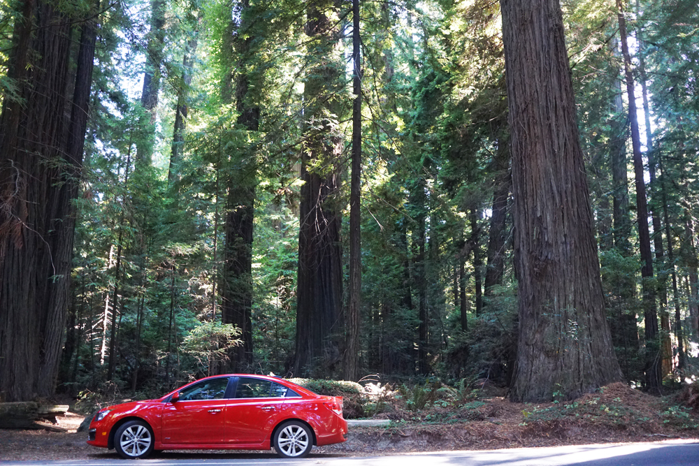 Redwood National and State Parks — Road Trip!!