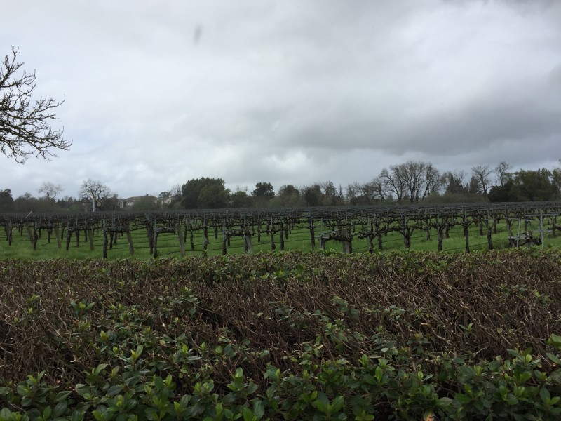 San Francisco Trip – Sightseeing in Wine Country