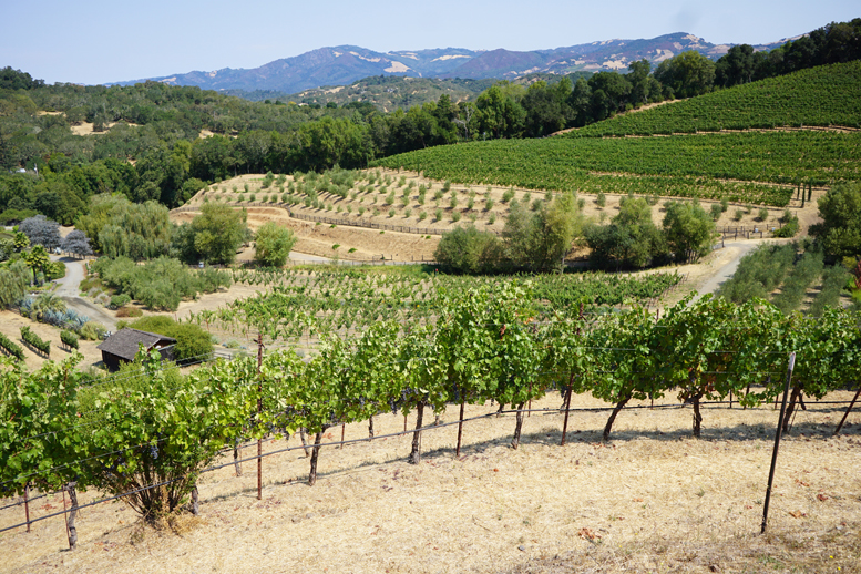3 Must-See Vineyards in Sonoma, California!!